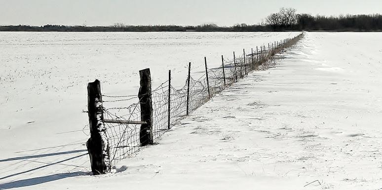 fencerow
