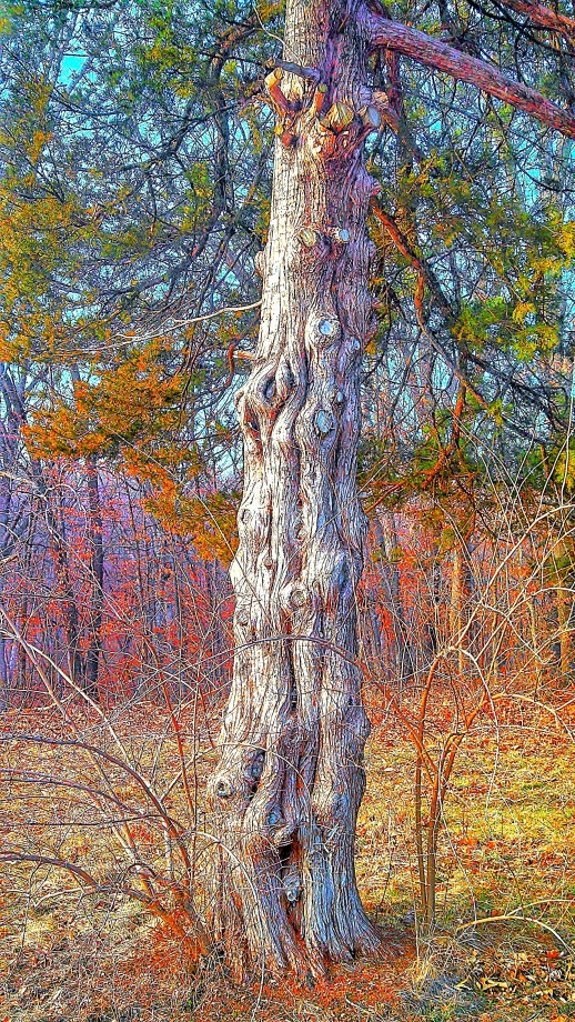 gnarled trunk_Snapseed