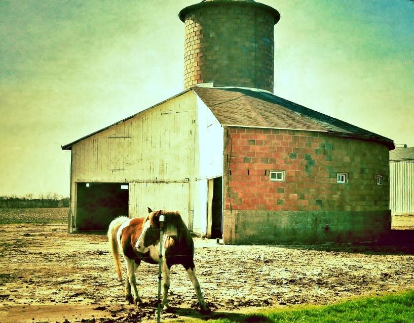 powell barn horse