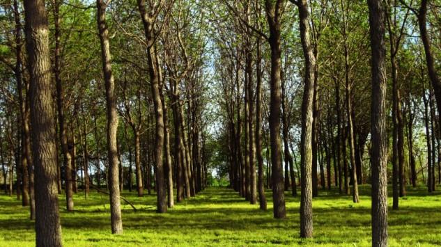 spring grove