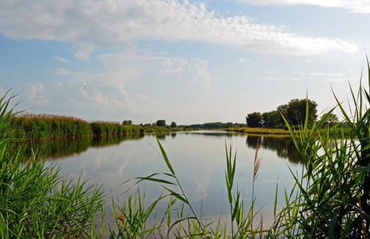 wetlands-11