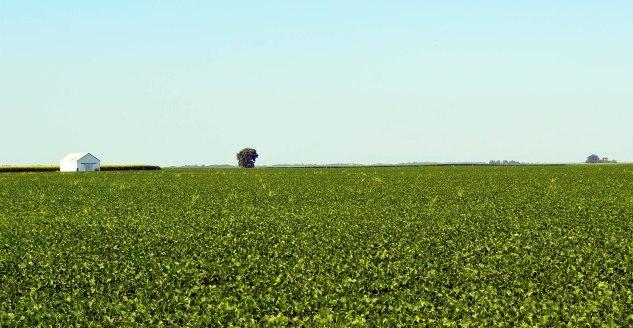 bean-field 2
