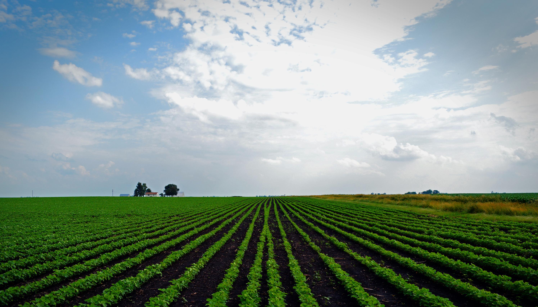 soybean field | Sunearthsky