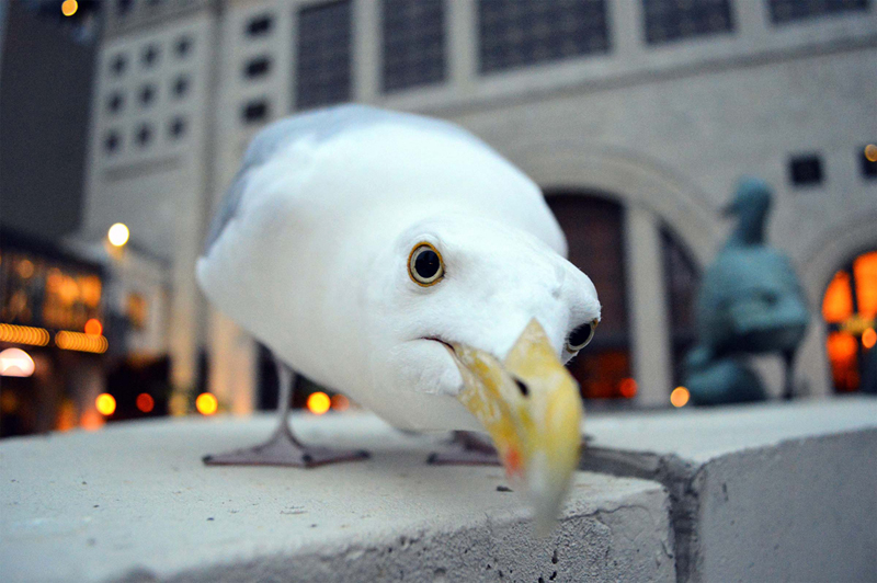 milwaukee-gull-on-riverwalk-211
