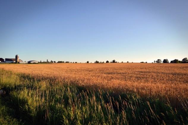 wisconsin-wheatfield 2