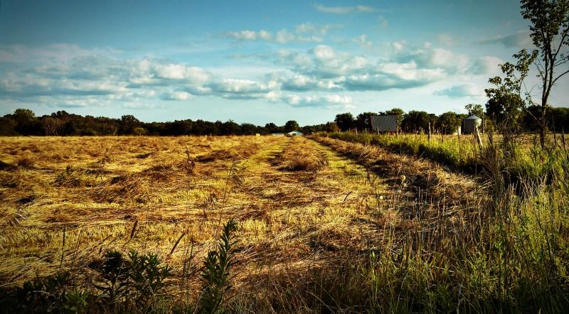 summer-harvest2