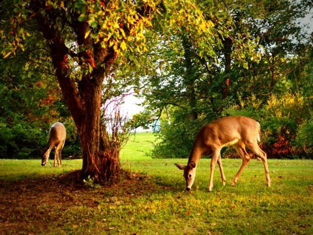 evening graze 2