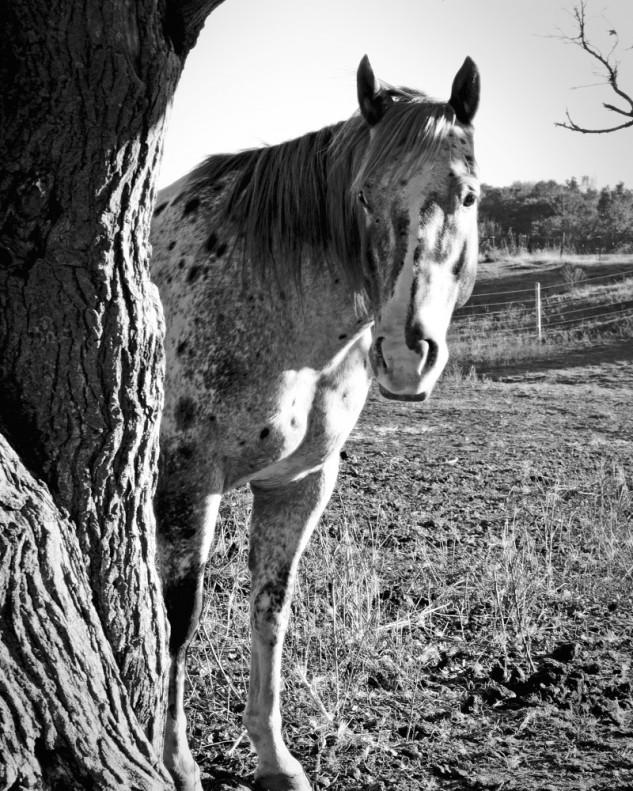 horse b & w 2