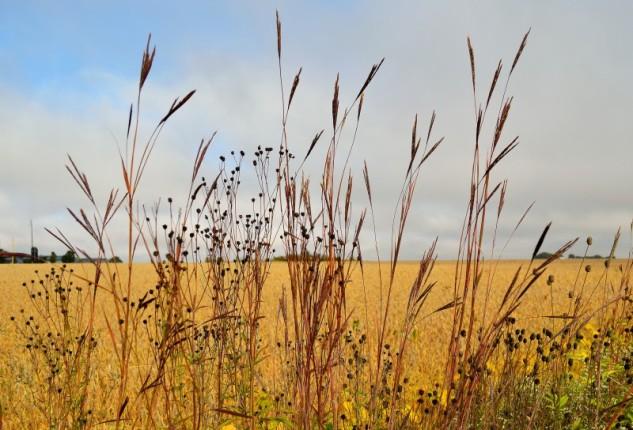 meadowgrass 2