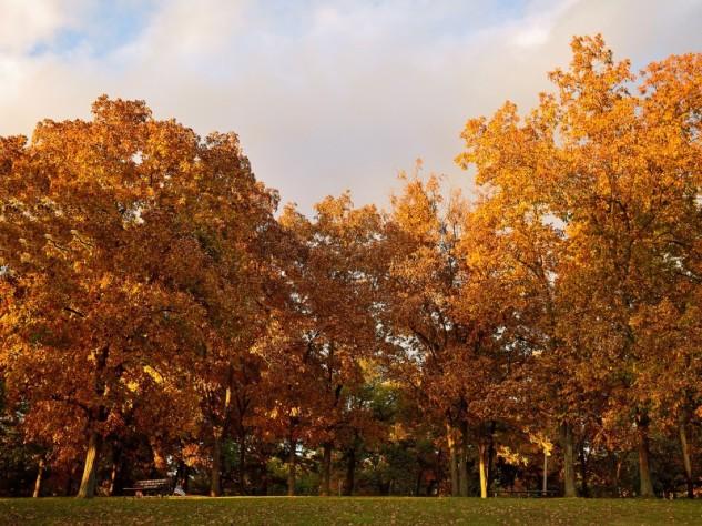 oaks 2