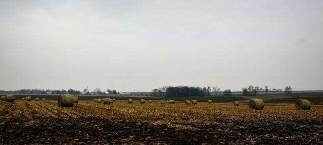 autumn haybales p
