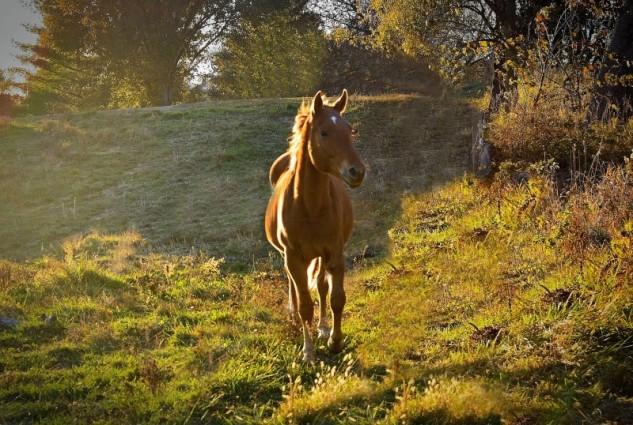 sun horse 2