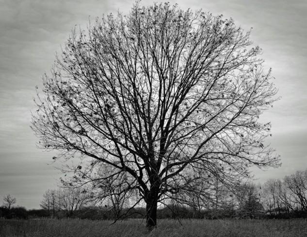 treefan