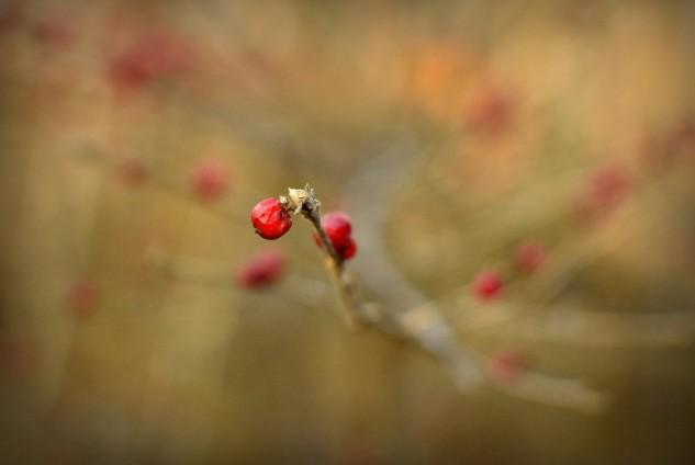 berry p2