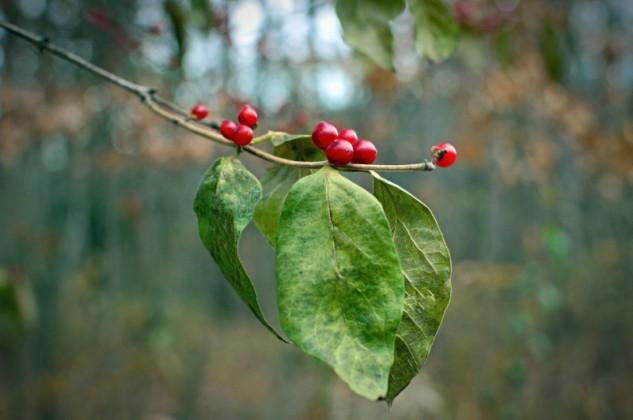 it's the berries 2