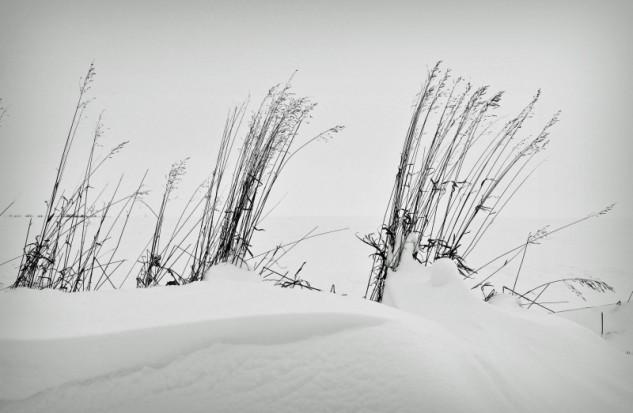 snowgrass 2