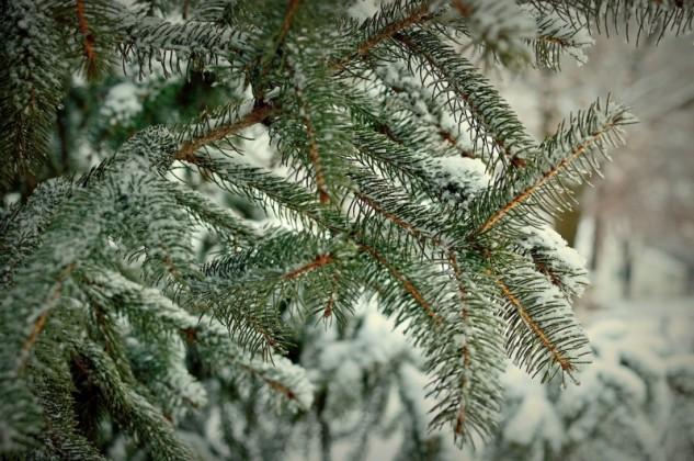 wintergreen p2