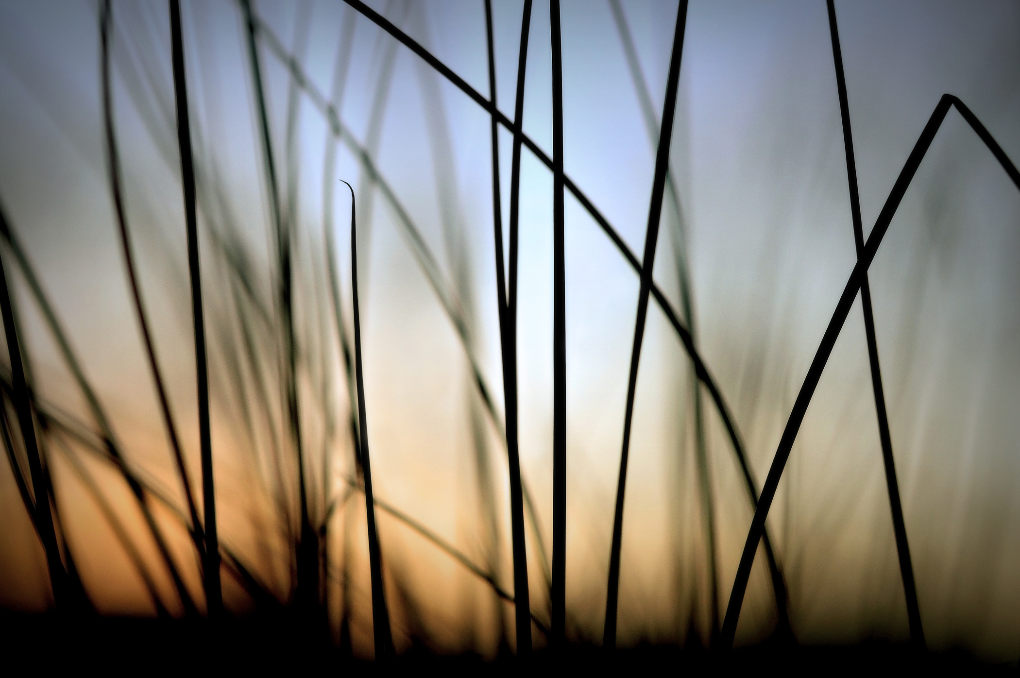 beachgrass 2