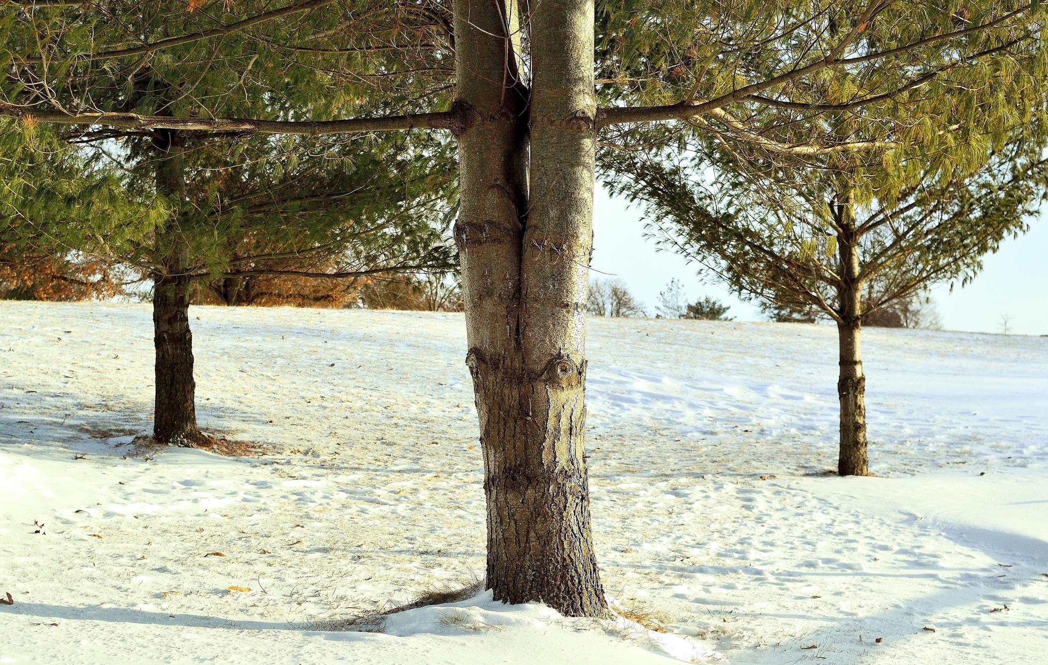 threetrees (2) p