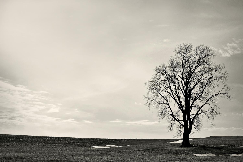 one tree 2