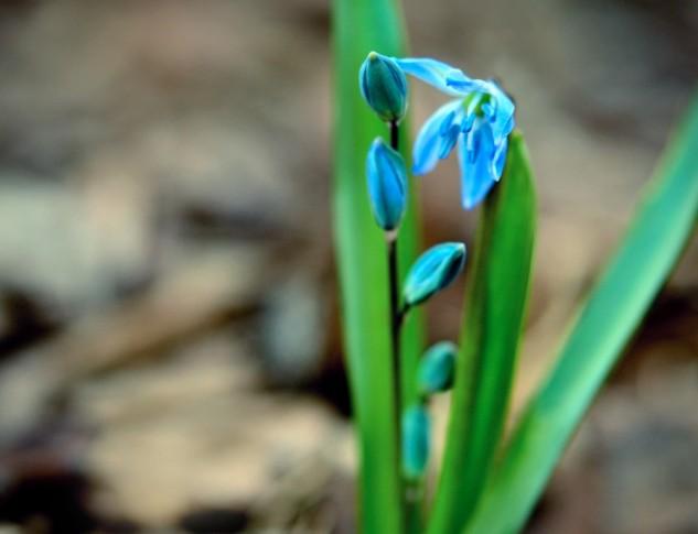 bluegreen 2
