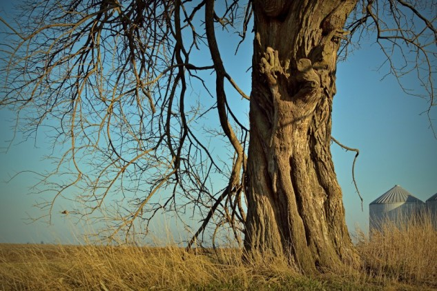 rorschach tree p2