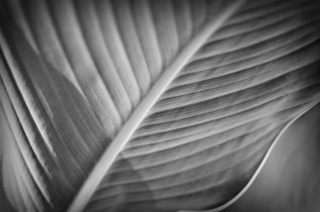 cana leaf monop