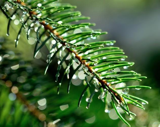 silver rain 2