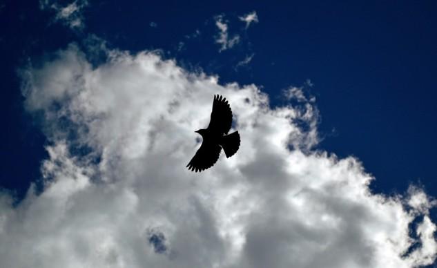blackbird whitecloud 2