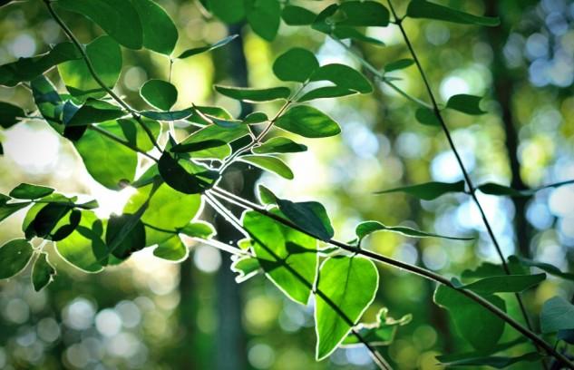 leafglow 2