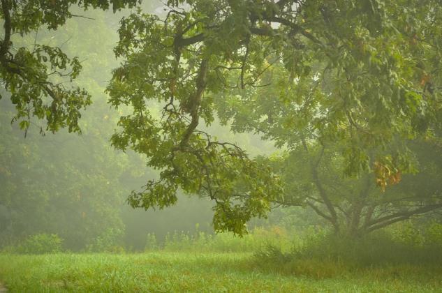 morning mist p2