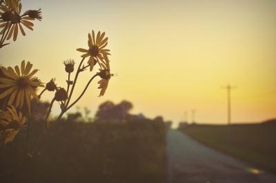 sunday sunset 2