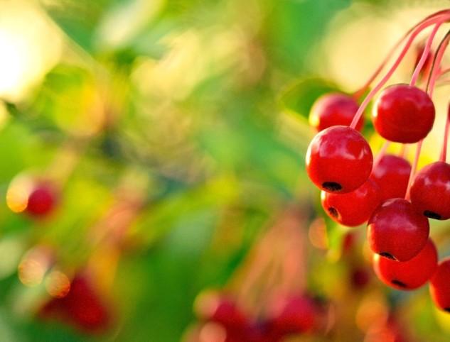 hawthorne berries 2p