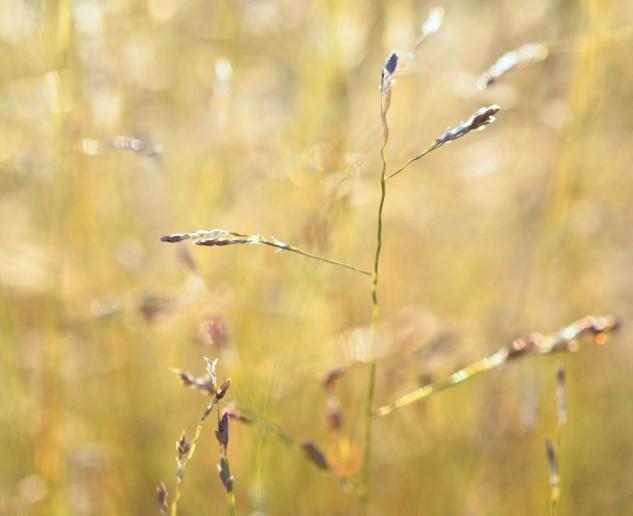 weed-rising-2