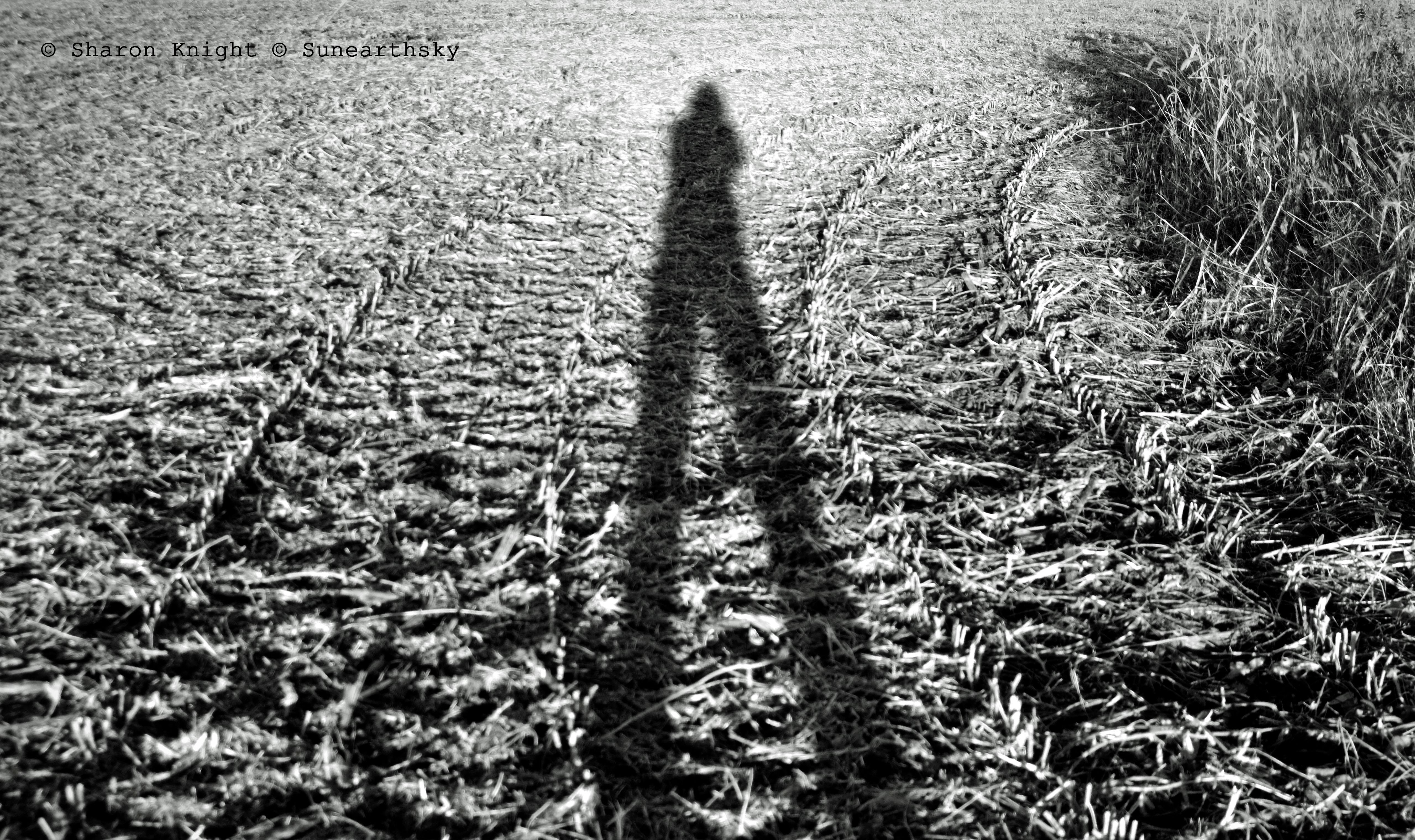 field portrait mono2