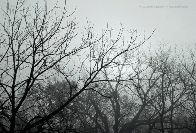 starling trees 2