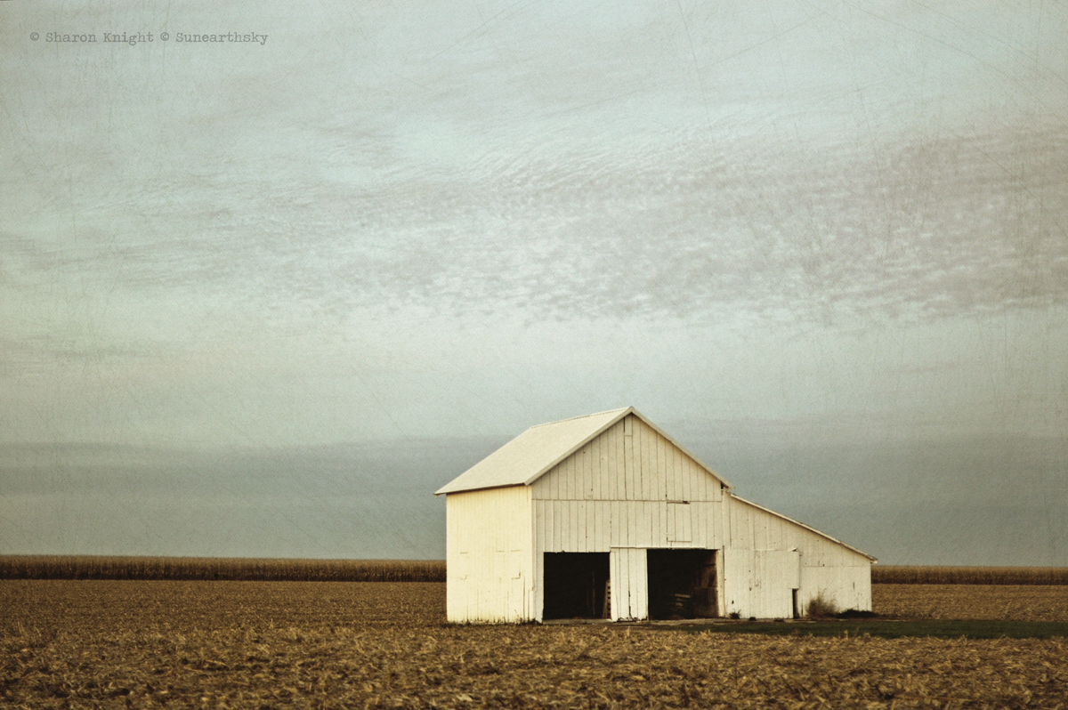 white shed 2