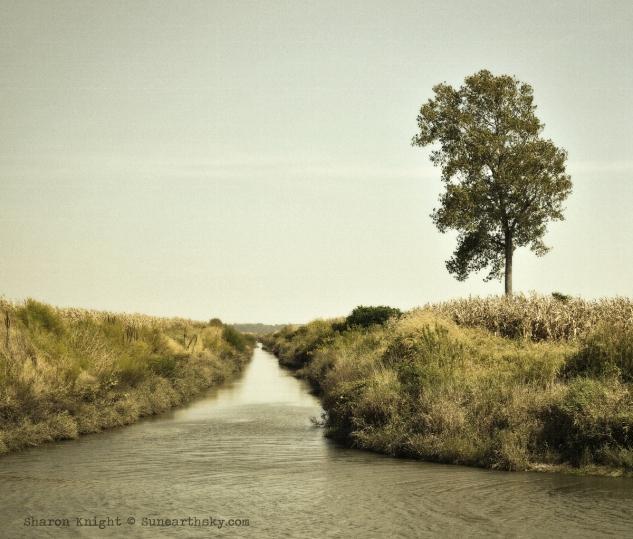 treecreek 2