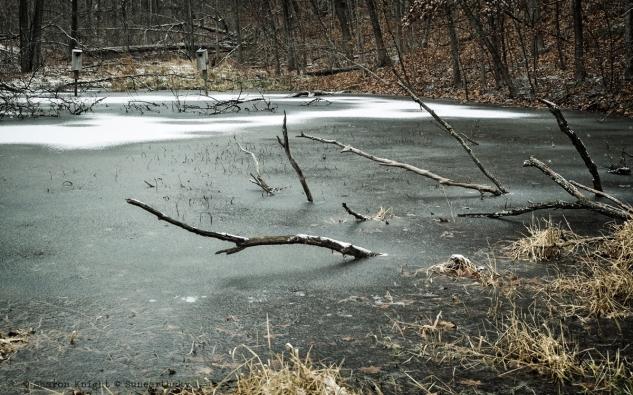 winterpond 2