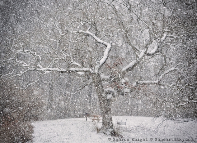 crooked tree in snow 2
