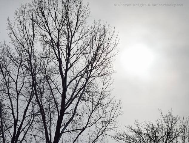 winter sun 2