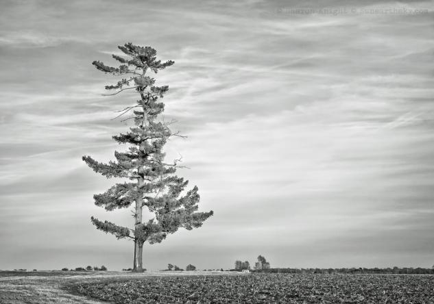 grinch tree 2