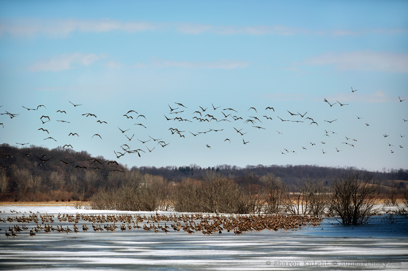 spring migration at emiquon 2