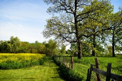 meadowpath 2