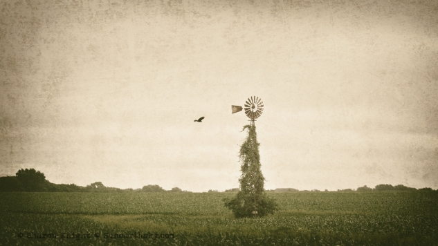 crow and windmill 2