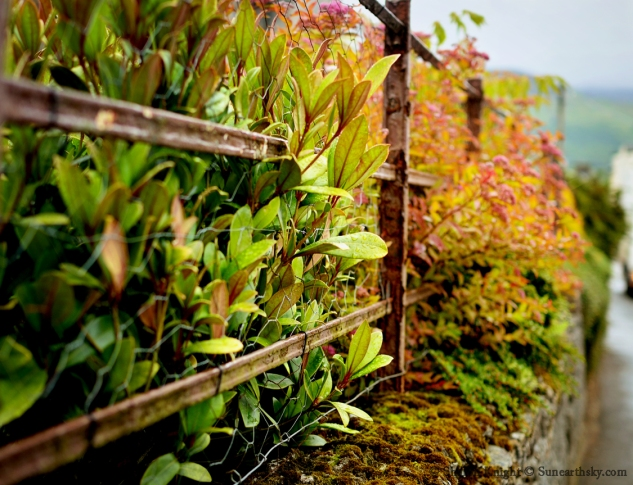 scotland fence 2