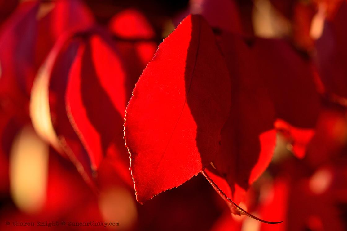 burning bush 2