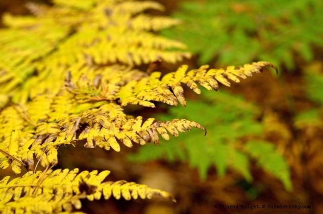 fall ferns 2