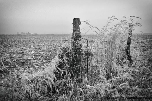 fencegrass 2