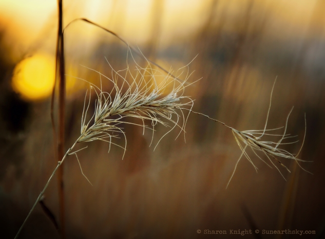 stalk and grass 2